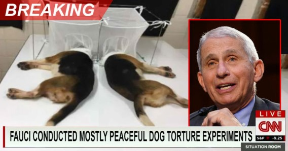 #ArrestFauci  #PuppyKILLER